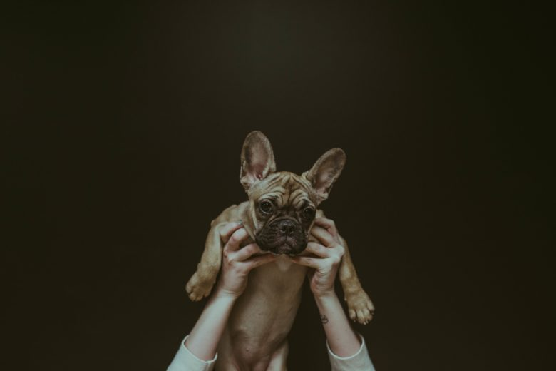 5 things you need to know before getting a pug